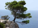 Pine tree on a rock